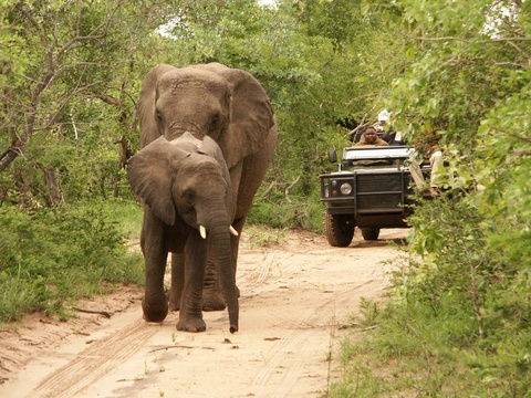 Shumbalala Game Drives